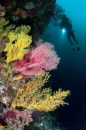 Divonsir Borges images coral wall - Google Search