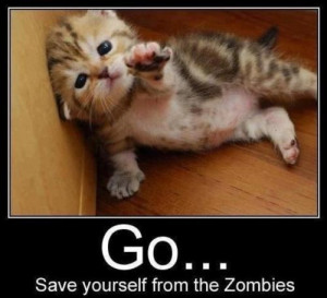 image funny zombie apocalypse quote spiders jpg the adventure time