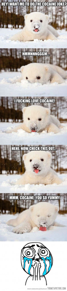 funny cute polar bear snow