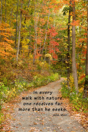 In Every Walk With Nature One Receives Far More Than He Seeks