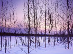 Winter Trees winter 509497 1024 768