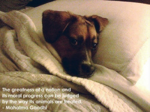 dog quotes - teddybear64 Photo