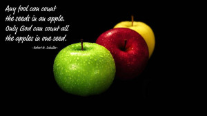 all-the-apples-in-one-seed