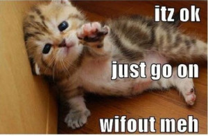 Funny Animal Pictures With Funny Quotes