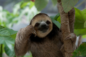 PHOTOS-OF-SLOTHS-facebook.jpg