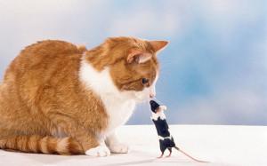 cat-mouse-bully_2696028k.jpg