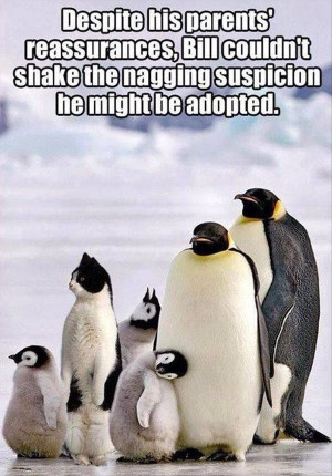 Funny Penguins: Bill the Cat Might Be AdoptedMy Incredible Website