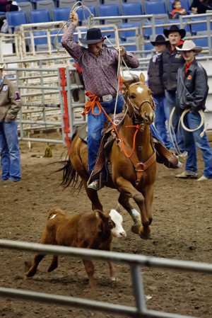 Displaying 20> Images For - Calf Roping Quotes...