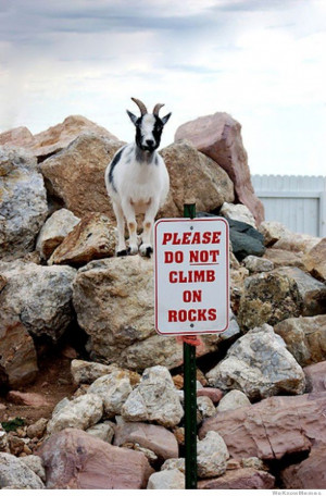 fuck-the-police-please-do-not-climb-on-rocks