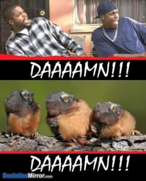 own damn friday icecube funny pictures 1365183940 ice cube funny