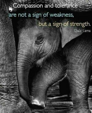 compassion & tolerance