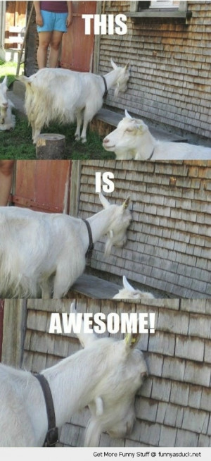 wall is awesome goat animal farm funny pics pictures pic picture image ...