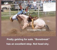 ... show pony pleasure barrel racing pole bending saddle bronc gymkhana