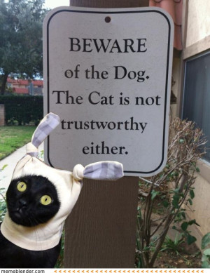 Funny-cat-dog-Top-25-funniest-cat-and-dog-quotes-11.jpg