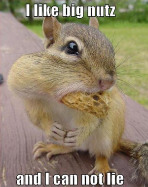 Funny Squirrel (59)