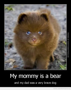 Funny Bear Quotes More funny pictures from this