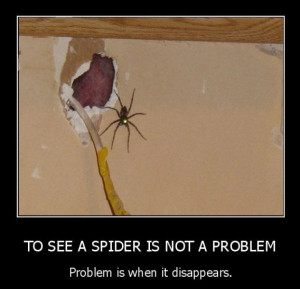 See_A_Spider_funny_picture