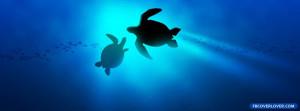 Sea Turtles 2 Facebook Timeline Profile Covers