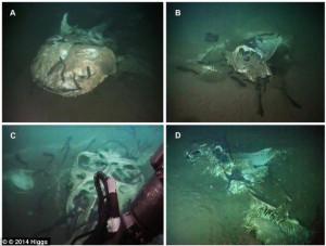 ... typus); B Mobulid carcass 1; C Mobulid carcass 2; D Mobulid Carcass 3