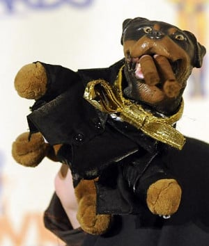 face long before Brno ever did,' - Triumph the Insult Comic Dog ...