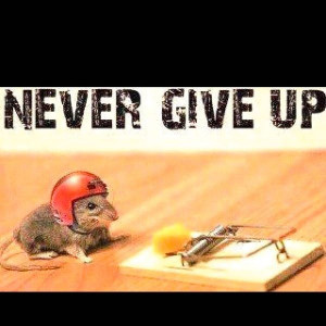 Never give up mouse trap helmet