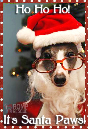 ... christmas gift dog funny animal christmas cards funny christmas animal