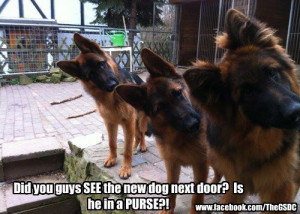 Funny German Shepherd Quotes Show me your funniest pictures
