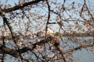 George Washington Cherry Tree Quote The washington cherry tree ...