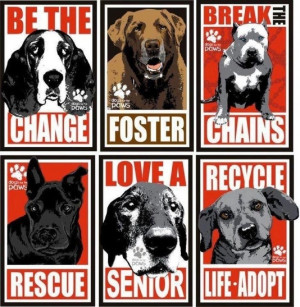 ... pet rescue and adoption! Animal Rescue, Adoption, Friends, Life