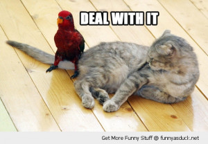 deal with it bird cat tail lolcat parrot animal funny pics pictures ...