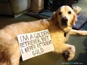 Golden_Retriever