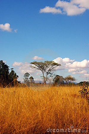 Quotes On The African Savanna Quotesgram