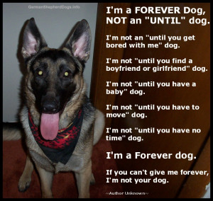 Sad Shelter Dog Poem Forever-dog-poem.jpg