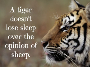 Tiger Quotes Tumblr Tumblr mcokj4gfdg1rwbakto1 500 tiger quotes tiger ...