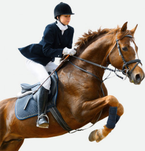 pony insurance quotes pony insurance quotes provide excellent ...