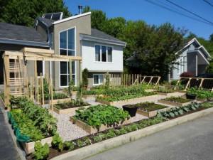front yard = wonderful edible garden