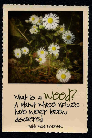 weed quote