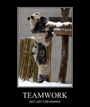 Teamwork Funny Animals Well, maybe animals can teach