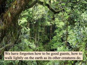 quote life hippie trees nature peace earth care hippy spirit Spiritual ...