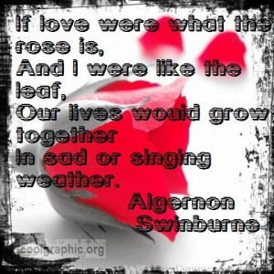 pictures of roses with quotes. Romantic Rose Quote By