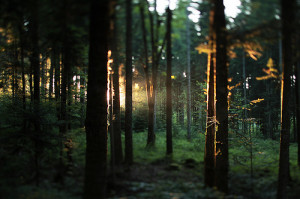 bosque, days, forest, green, light, lights, natural, reflections ...
