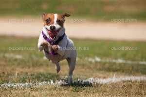 Images Dog The Grass Photo