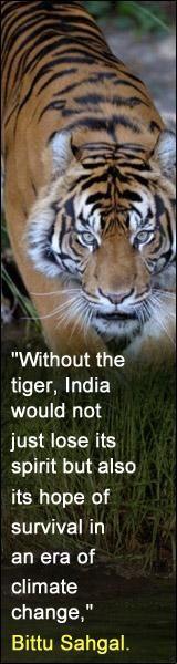 quotes : trade in tiger, sheetah....