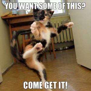 come at me bro, funny cats