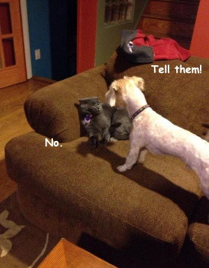 Domestic Fight over the Shredded Toilet Paper [funny cat and dog ...