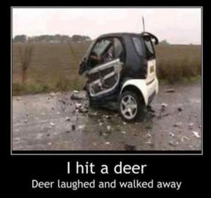 Funny car crash – I hit a deer