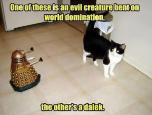 ... Pictures funny pictures evil genius cat is excited about his creation