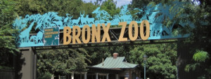 The Bronx Zoo Source Flickr