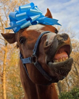 It's a gift horse, people. Strangely funny. Thanks, E.