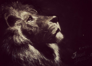 Lion Quotes Strength Lion quotes strength for lion